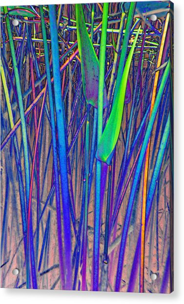Arrow Reeds Acrylic Print by Georgia Bassen