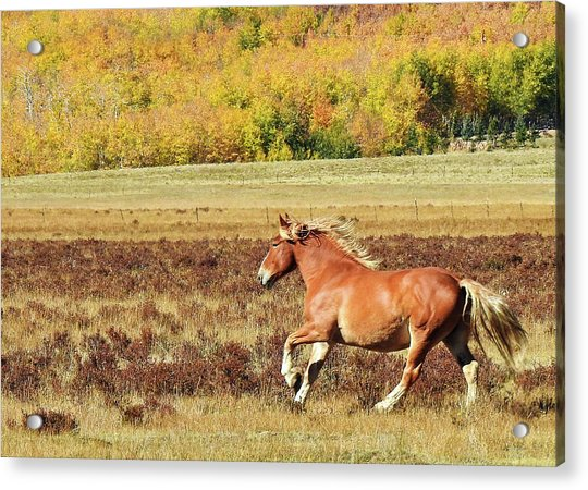Aspen And Horsepower Acrylic Print