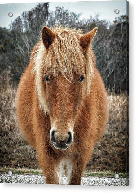 Assateague Island Horse Miekes Noelani Acrylic Print