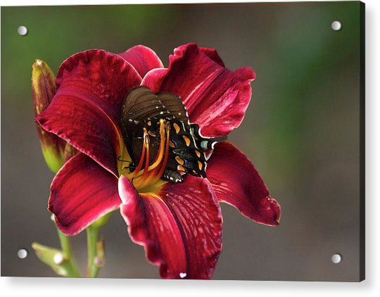 At One With The Orchid Acrylic Print