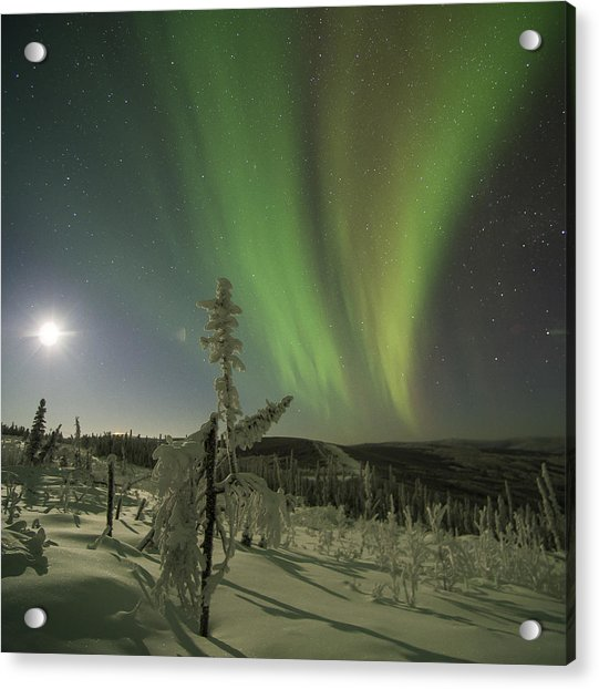 Aurora In The Hoar Frost Acrylic Print