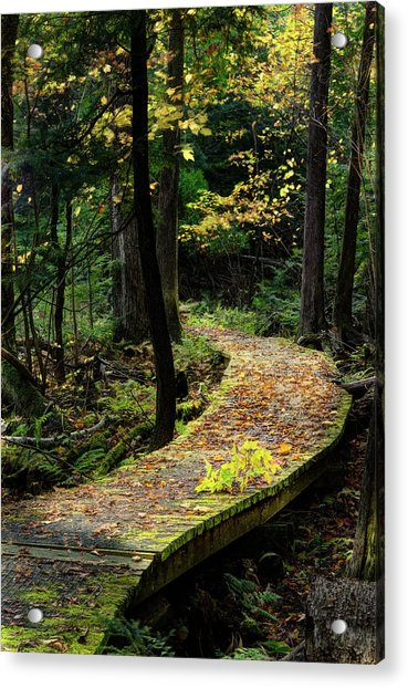 Autumn Boardwalk Acrylic Print