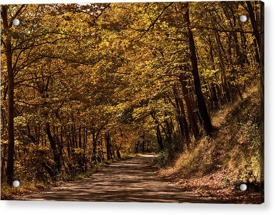 Autumn Colours Acrylic Print by Nikos Stavrakas