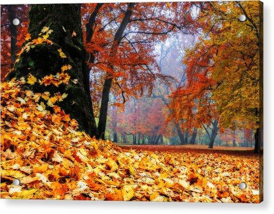 Autumn In The Woodland Acrylic Print