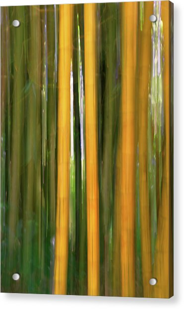 Bamboo Impressions Acrylic Print