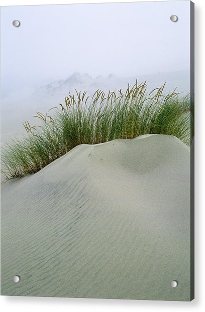 Beach Grass And Dunes Acrylic Print