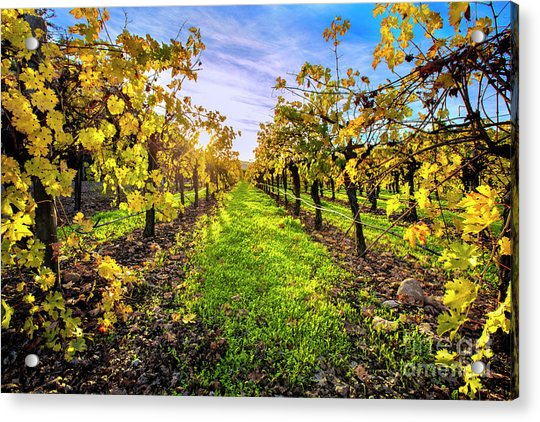 Beautiful Colors On The Vines Acrylic Print