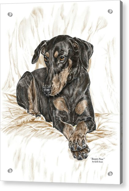 Beauty Pose - Doberman Pinscher Dog With Natural Ears Acrylic Print
