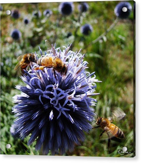 Bee Circles Acrylic Print