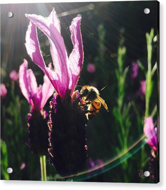 Bee Illuminated Acrylic Print
