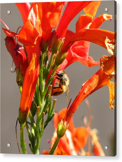 Day In A Life Of A Bee Acrylic Print