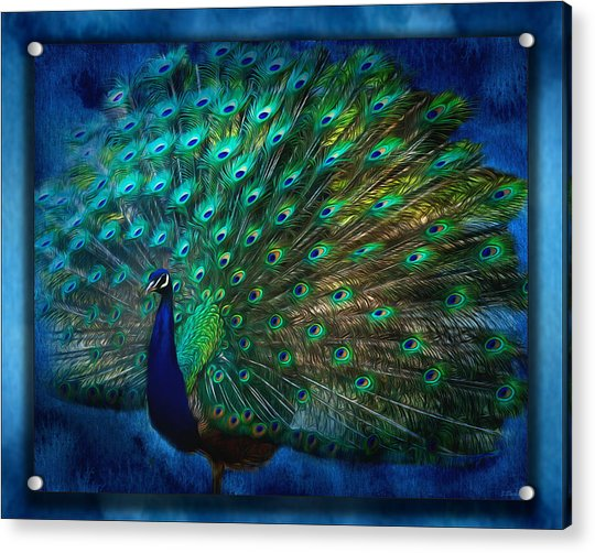 Being Yourself - Peacock Art Acrylic Print