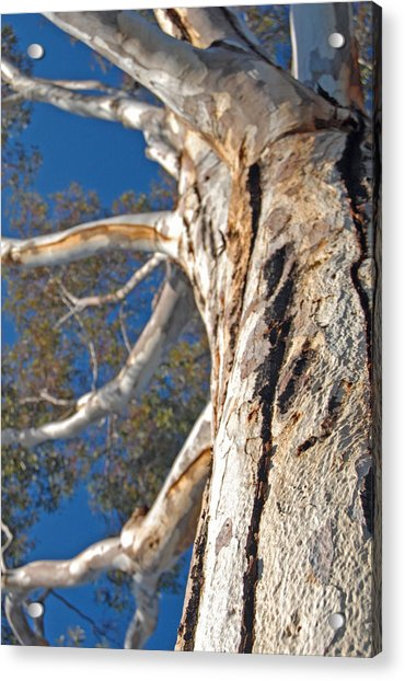 Bending Acrylic Print by Jean Booth