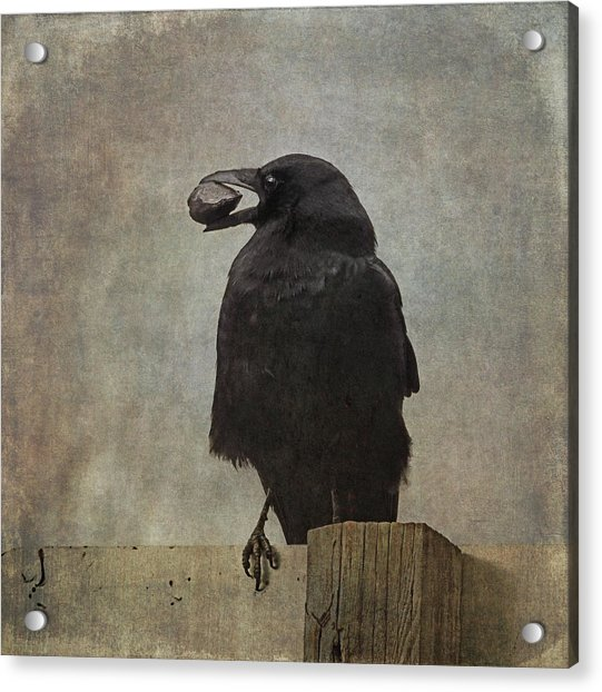 Acrylic Print featuring the photograph Beware Of Crows by Sally Banfill