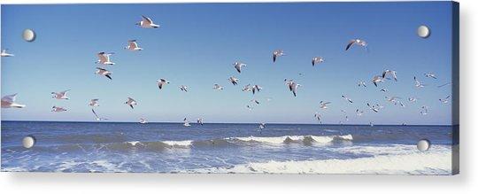 Birds Flying Over The Sea, Flagler Acrylic Print