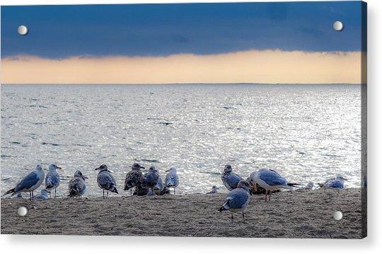 Birds On A Beach Acrylic Print