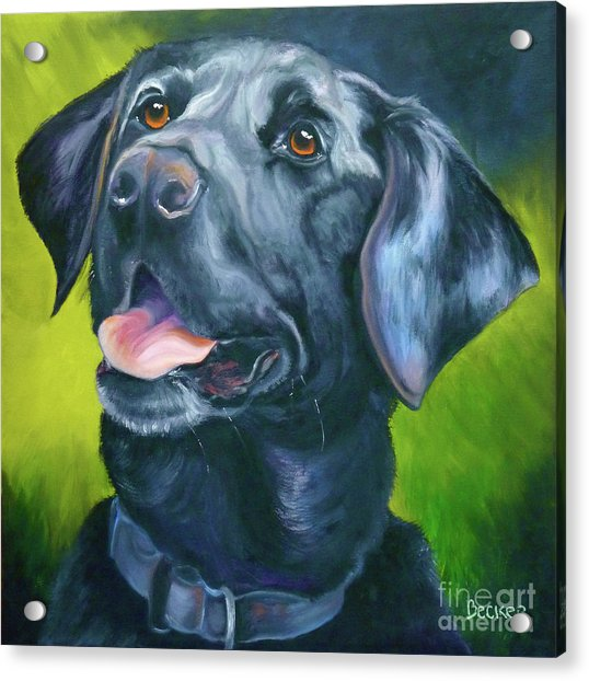 Black Lab Forever Acrylic Print