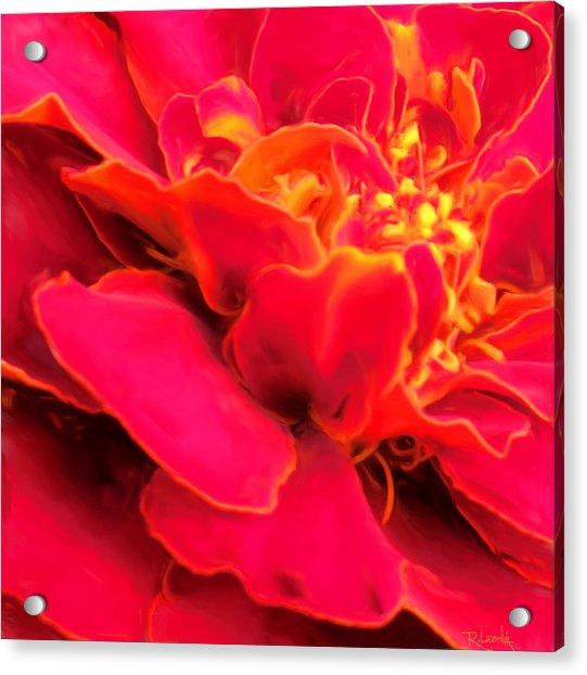 Blazing Pink Marigold Acrylic Print