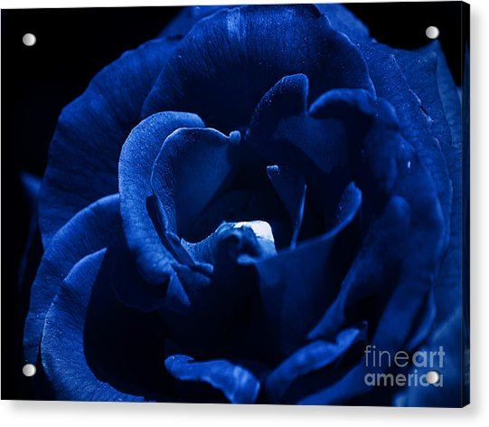 Blue Blue Rose Acrylic Print