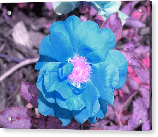 Blue Acrylic Print by Evan Pullins