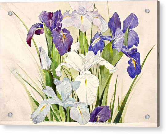 Acrylic Print featuring the painting Blue Irises-posthumously Presented Paintings Of Sachi Spohn  by Cliff Spohn