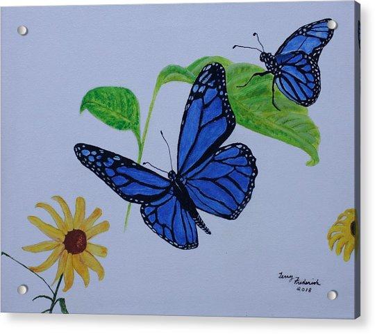 Blue Monarch Acrylic Print