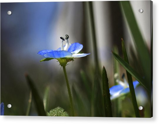 Blue On Green Acrylic Print by John Ellis