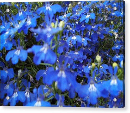 Bluer Than Blue Acrylic Print