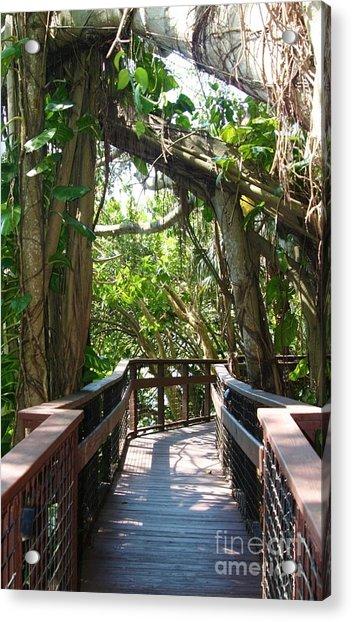 Boardwalk At Selby Gardens Sarasota Florida Photograph By