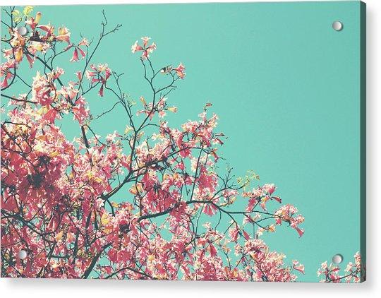 Boho Cherry Blossom 1- Art By Linda Woods Acrylic Print