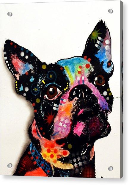 Boston Terrier II Acrylic Print