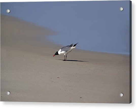 Bottoms Up Acrylic Print by Brendan Reals