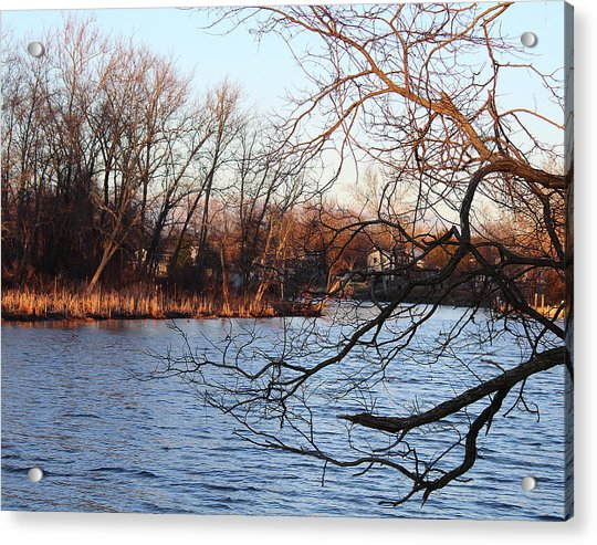Branches Over Water Acrylic Print