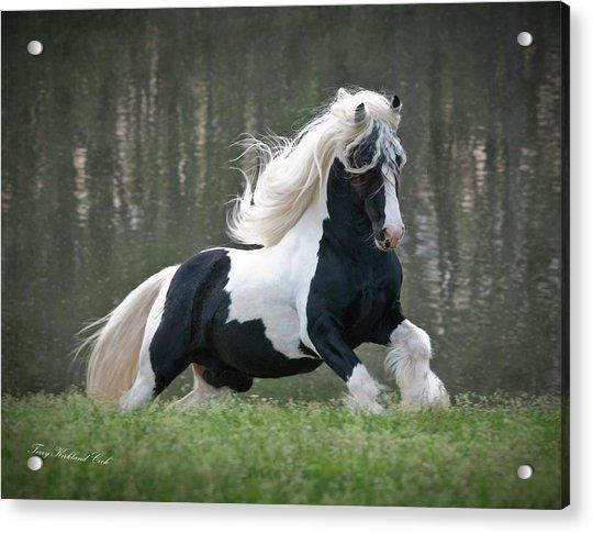Breathtaking Stallion Acrylic Print