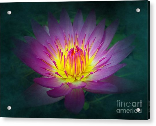 Brightly Glowing Lotus Flower Acrylic Print