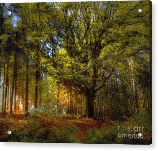 Broceliande Forest Acrylic Print