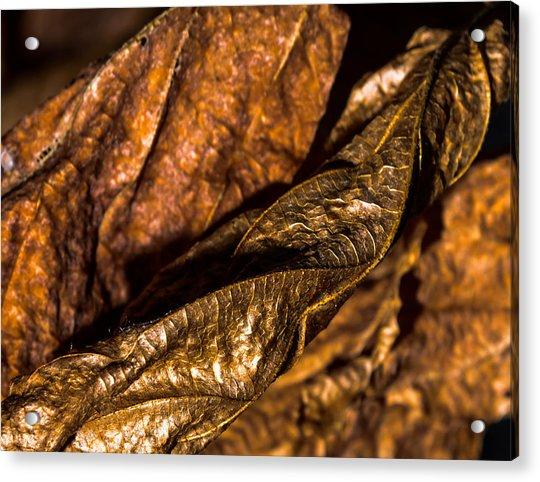 Bronze Leaves Acrylic Print