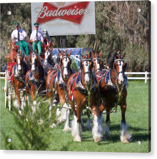 Acrylic Print featuring the photograph Budweiser Clydesdales Perfection by Alice Gipson
