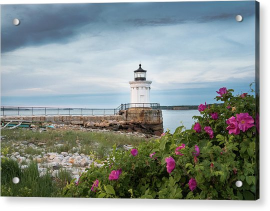Bug Light Blooms Acrylic Print