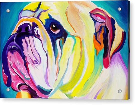 Bulldog - Bully Acrylic Print