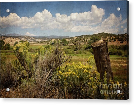 Bush Creek Acrylic Print