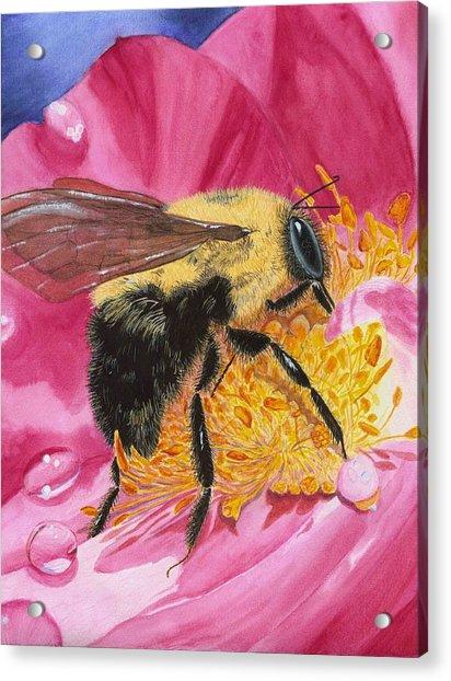 Busy Bee Acrylic Print