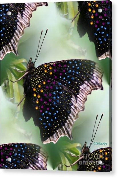 Butterfly Sunbath #2 Acrylic Print