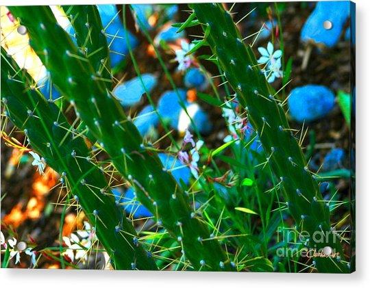 Cactus Garden Acrylic Print