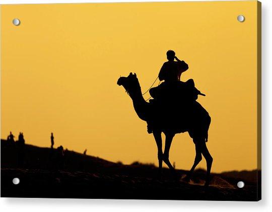 Camel At Jaisalmer, India Acrylic Print