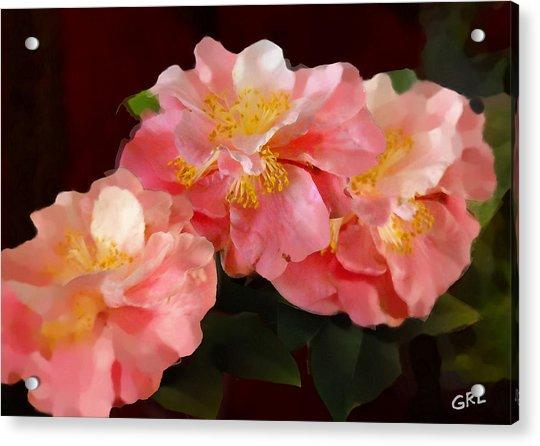 Camellias 1cmods1b Digital Painting Gulf Coast Florida Acrylic Print