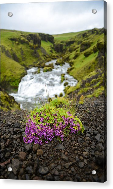 Campion On The Fimmvorduhals Acrylic Print