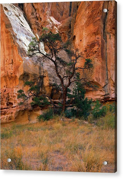 Canyon View With Tree Acrylic Print