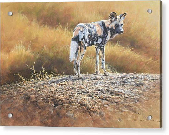 Acrylic Print featuring the painting Cape Hunting Dog by Alan M Hunt