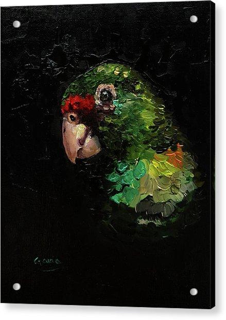 Captain The Parrot Acrylic Print